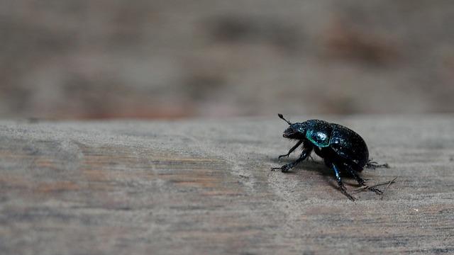 Fliegen wohnung schwarze der winter in kleine im Kleine Mücken